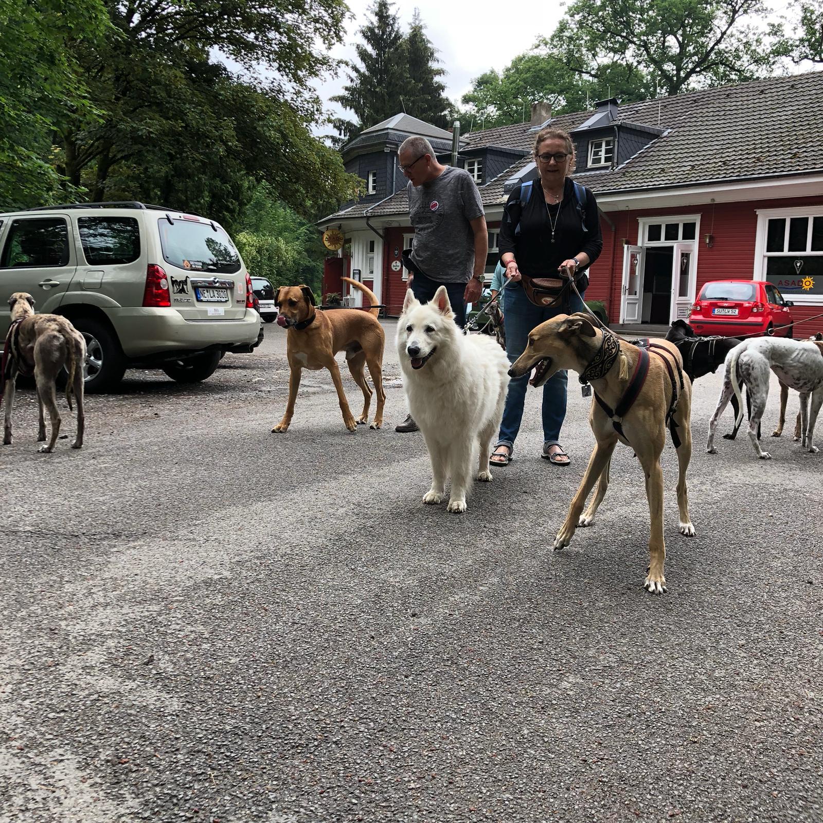 greyhound forever